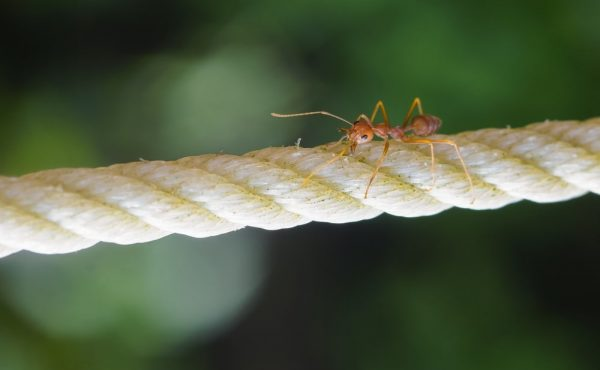 ant on rubber rope